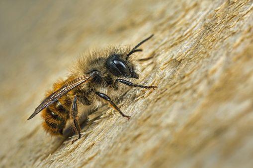 0628-bee