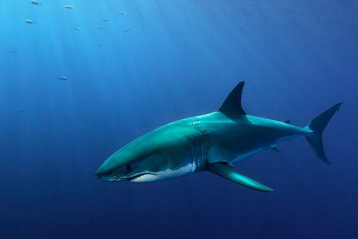 0702-Shark