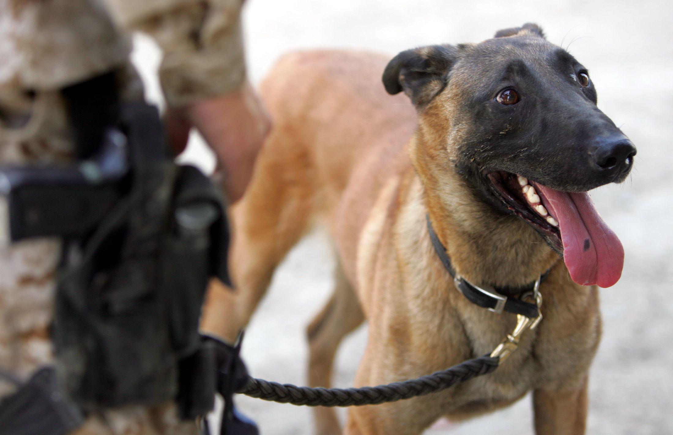 Dog Detained For Two Days After Customs Paperwork Mix Up