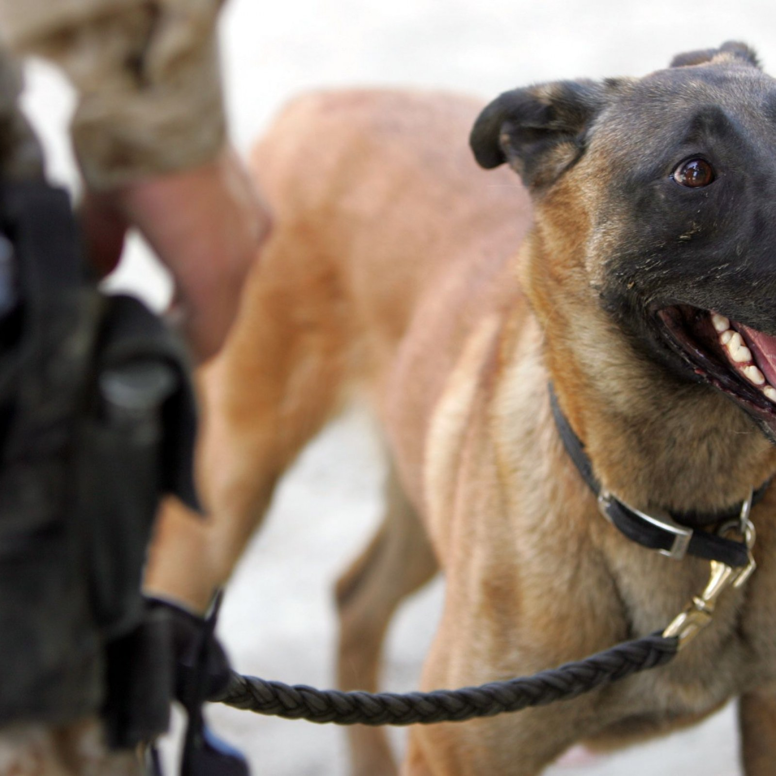 Dog Detained for Two Days After Customs Paperwork Mix-Up at