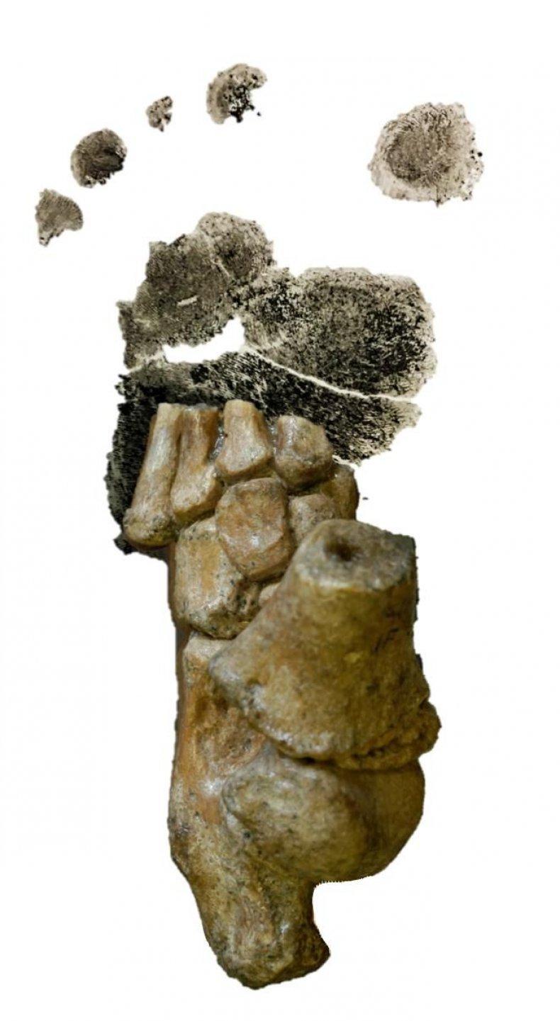 7_5_Ancestor toddler foot