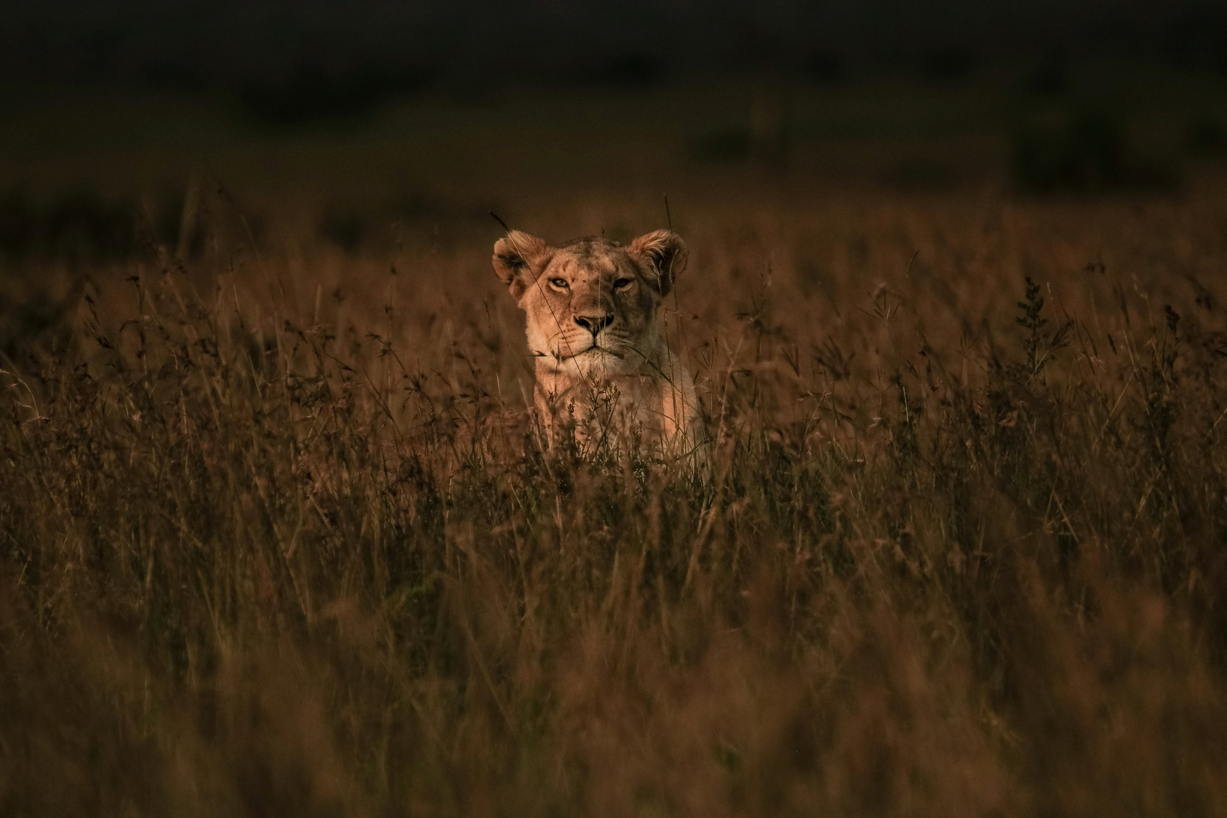 Lions Kill Poachers and Six Other Times Wild Animals