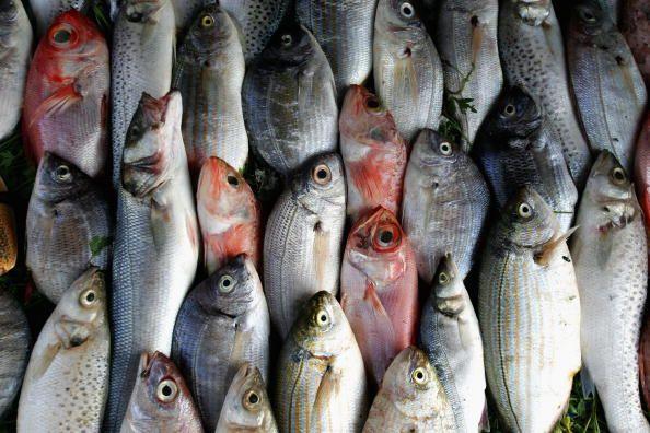 0709-Fish