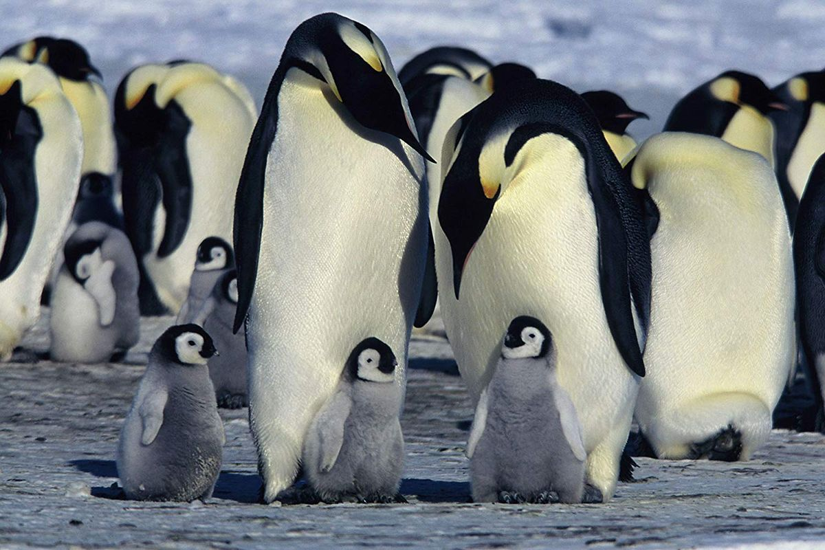 10 March Of The Penguins
