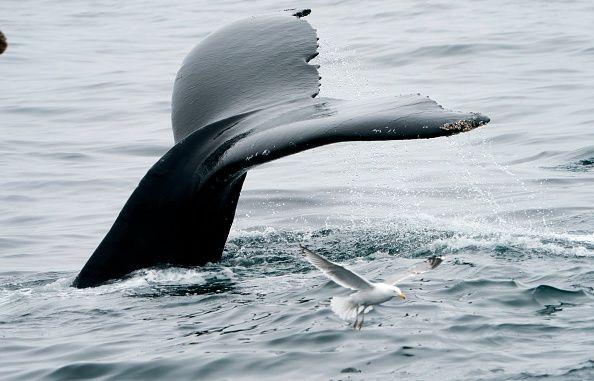 0716-whale