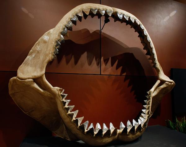 Megalodon Fact vs. Fiction