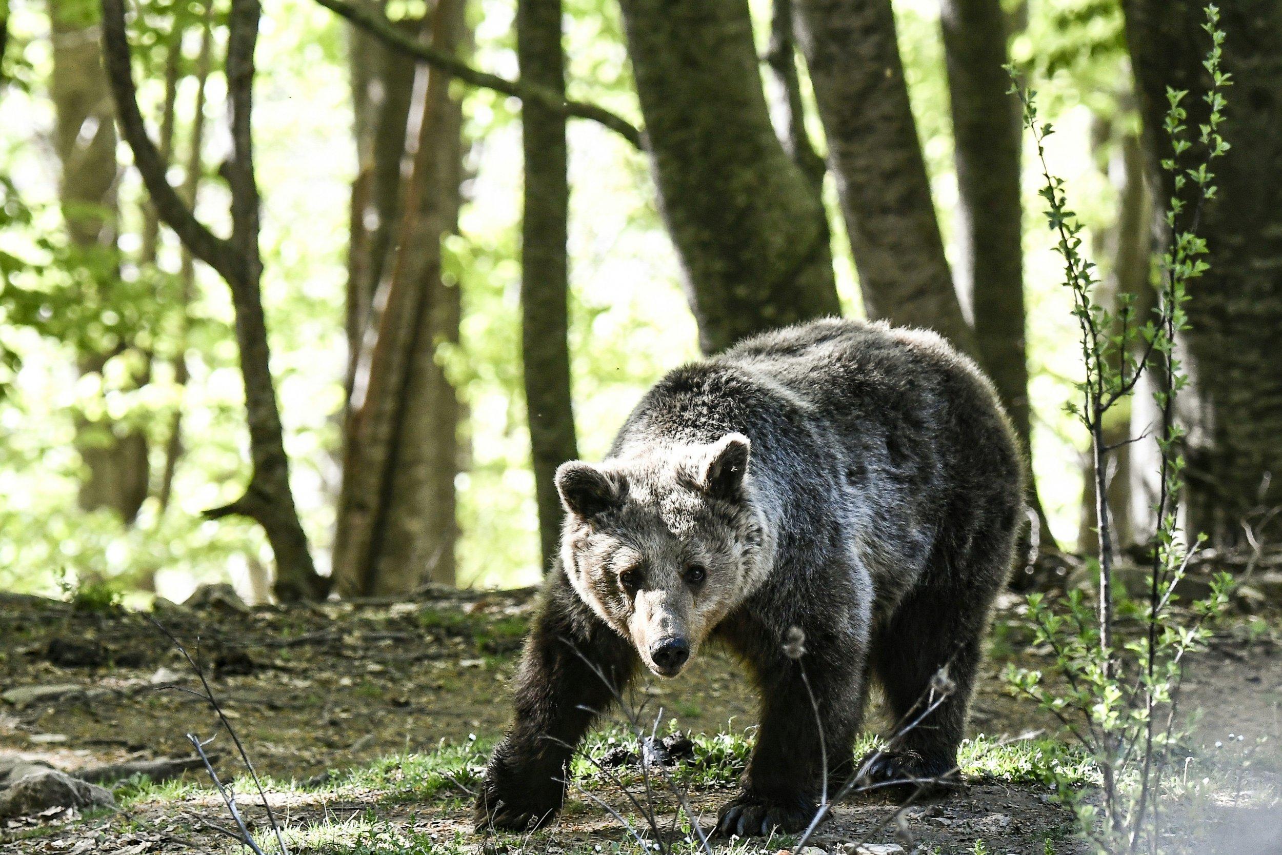 07_18_bear