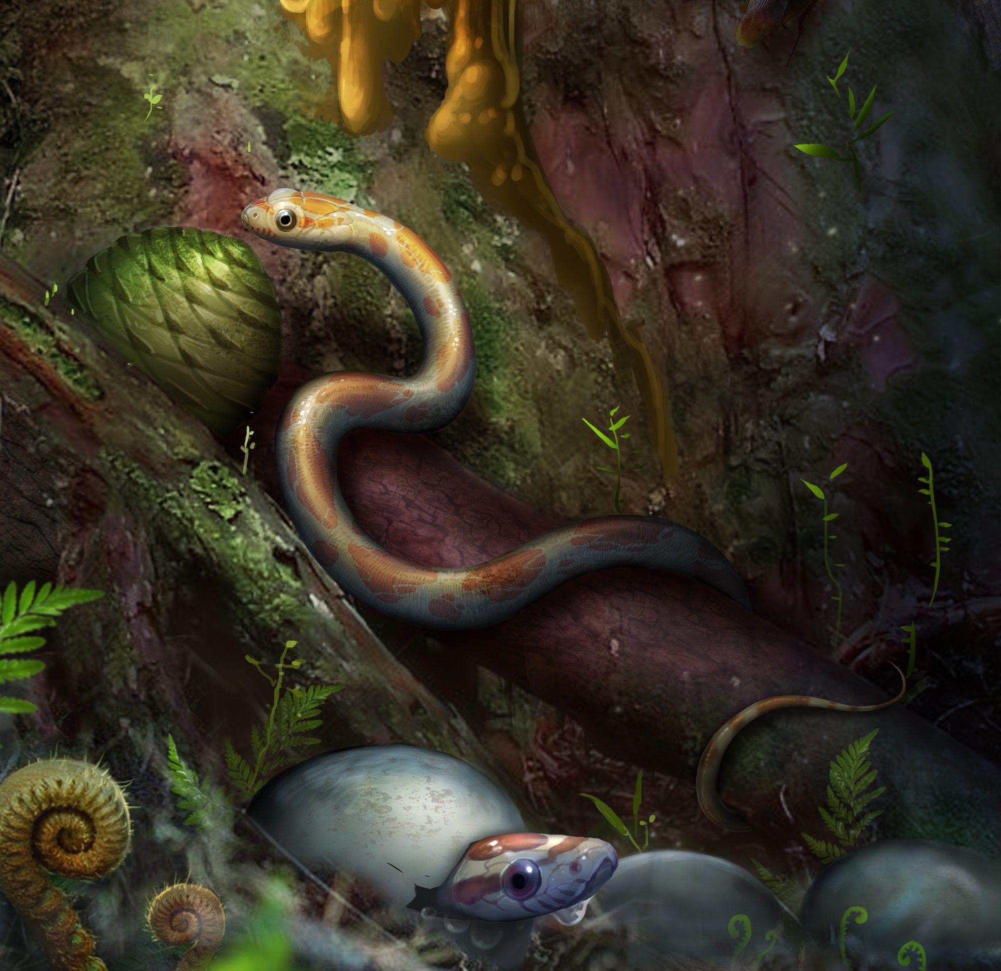 7_18_Snake babies
