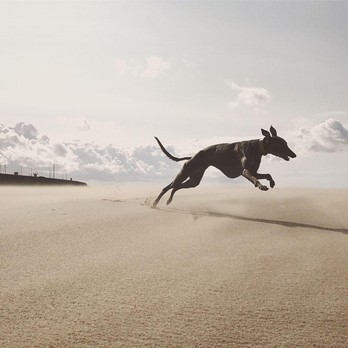 08-2nd-ANIMALS-Katie-Wall