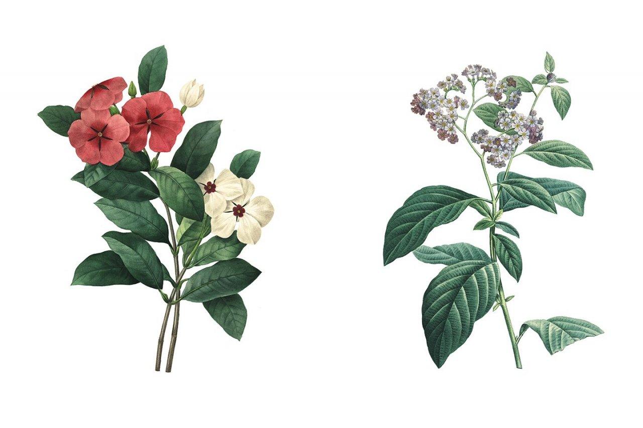 FE_Cancer_Plants_02_516413445 copy