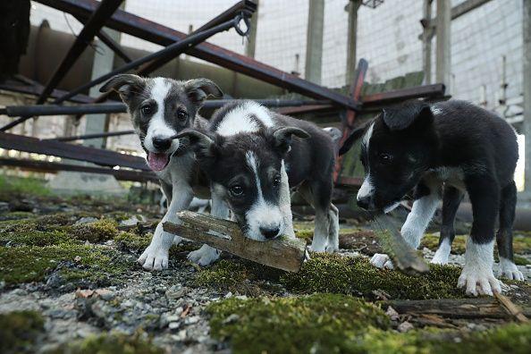 0720-dogsfront