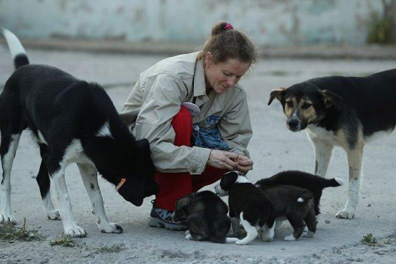 Volunteerfeedingdogs-0720
