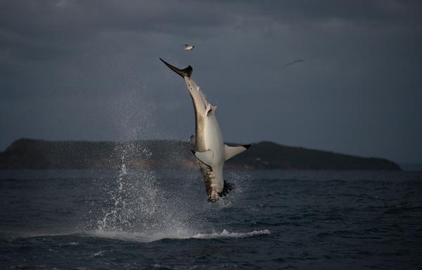 How to Live Stream 'Shark Week'