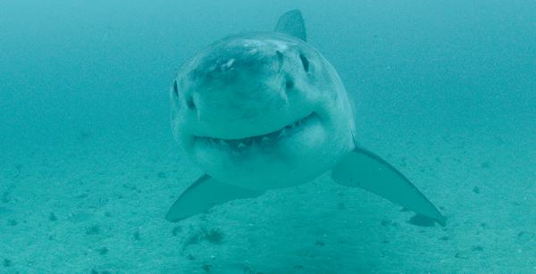 What's on 'Shark Week' Tonight?