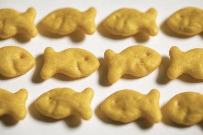 Goldfish-snacks-stock