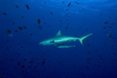 0724-shark