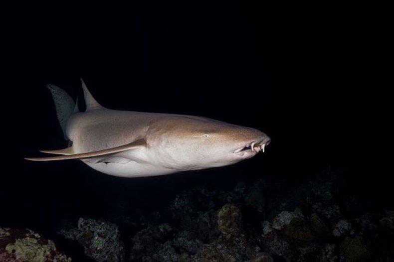 0724-shark2