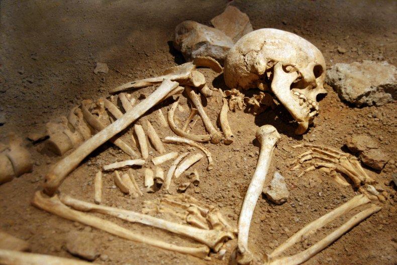 7_25_Skeleton