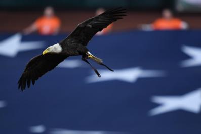 Louisiana's Bald Eagle Population is on the Rise