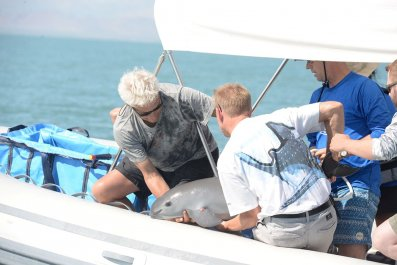 vaquita_conservation_endangered_fishing