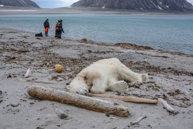 Authorities defend cruise line's decision to shoot polar bear