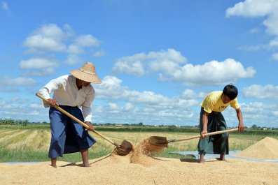 Rice Field in Myanmar