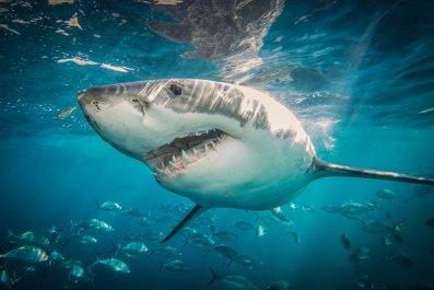 0731-shark