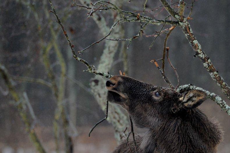 08_01_Moose