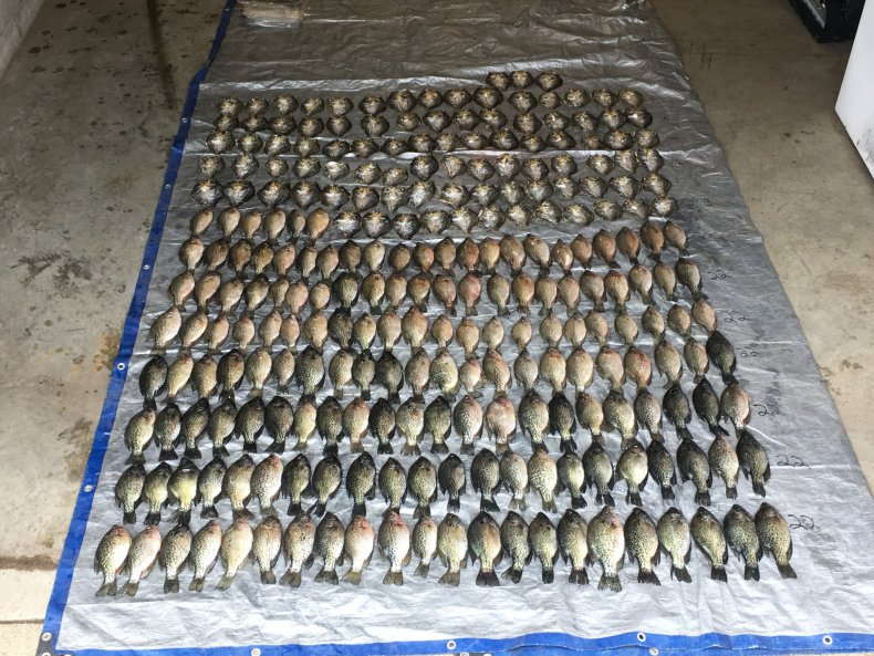 seized crappies