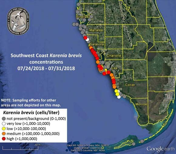 What Is Florida's Red Tide? Cause, Map of Contaminated Waters