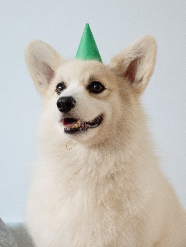 Winston Celebrates His 6th Birthday