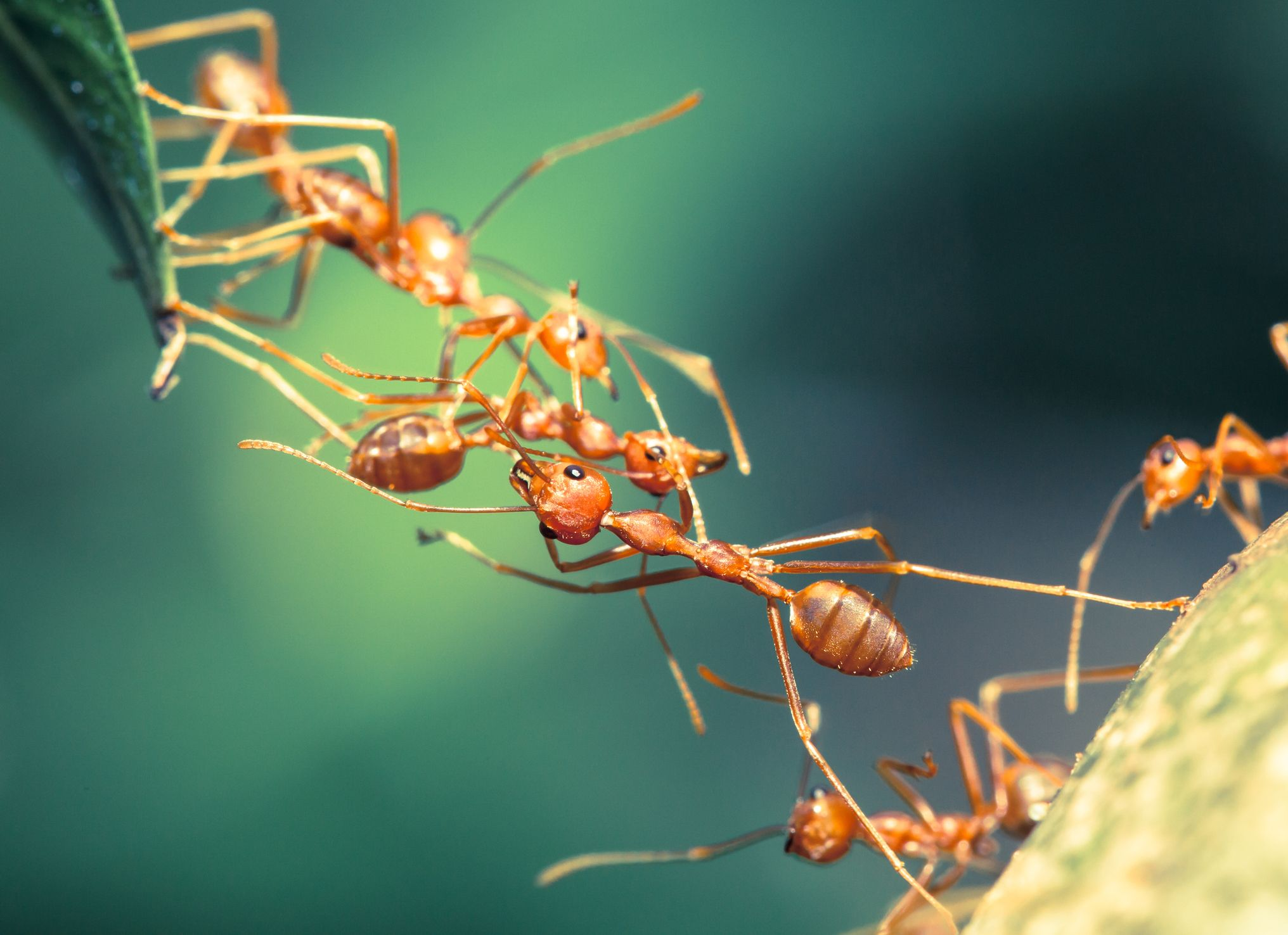 8_7_Ant bridge
