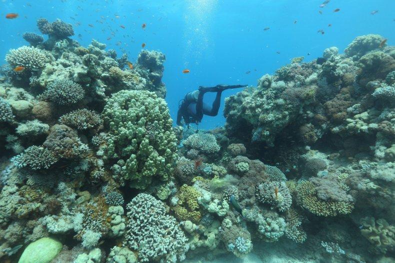 Coral Reef Israel