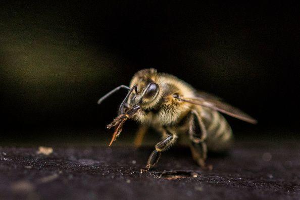 0807-bee