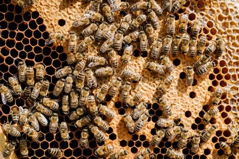 0807-bees