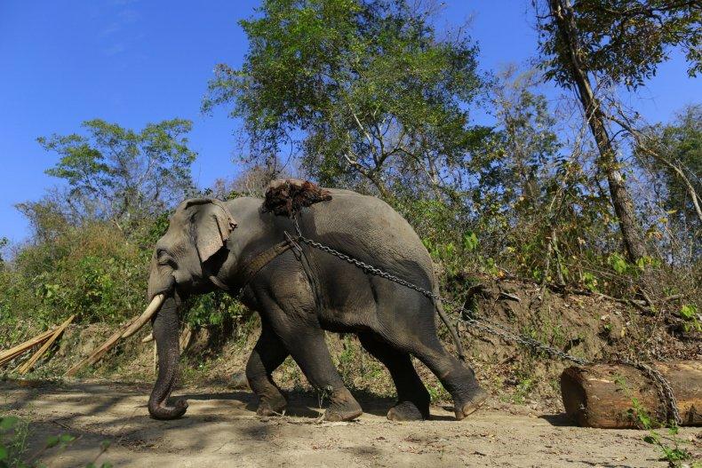 Timber Elephant in Myanmar