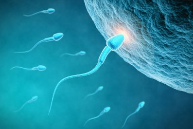 sperm-egg-fertility-fertilization-stock