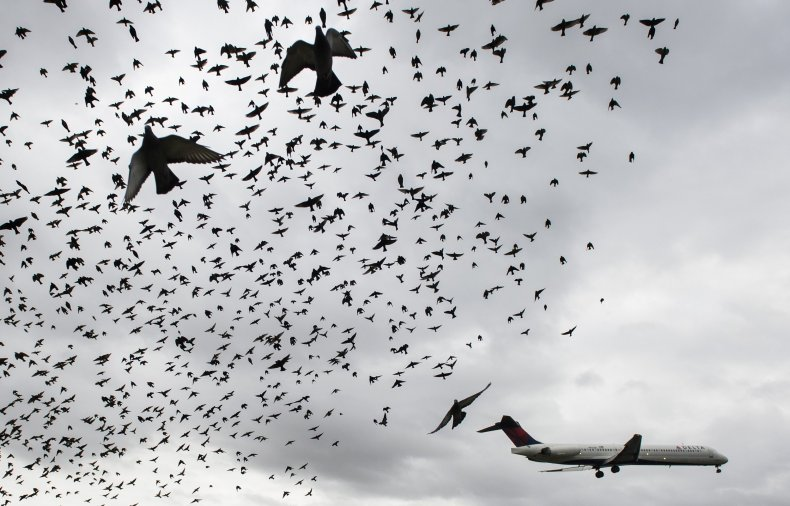 drone herds birds away from planes