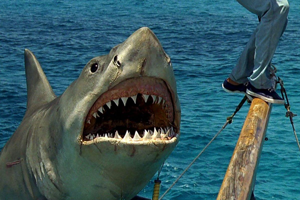 8 jaws-the-revenge-1108x0-c-default