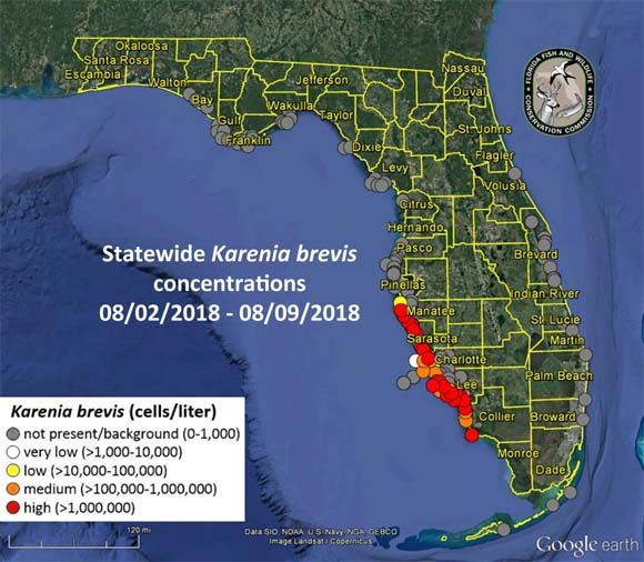 Florida Red Tide 2018 Map, Update: When Will Red Tide End? on tennessee map, new york map, maryland map, florida flag, michigan map, colorado map, florida geography, florida counties, florida attractions, illinois map, north carolina map, idaho map, minnesota map, florida airports, florida lakes, florida outline, florida coast, florida beach, florida weather, nevada map, florida symbols, missouri map, florida directions, kansas map, florida christmas, arkansas map, pennsylvania map, florida information, florida resorts, florida postcard, florida from space, new jersey map, florida food, wisconsin map, florida rivers, florida cities,