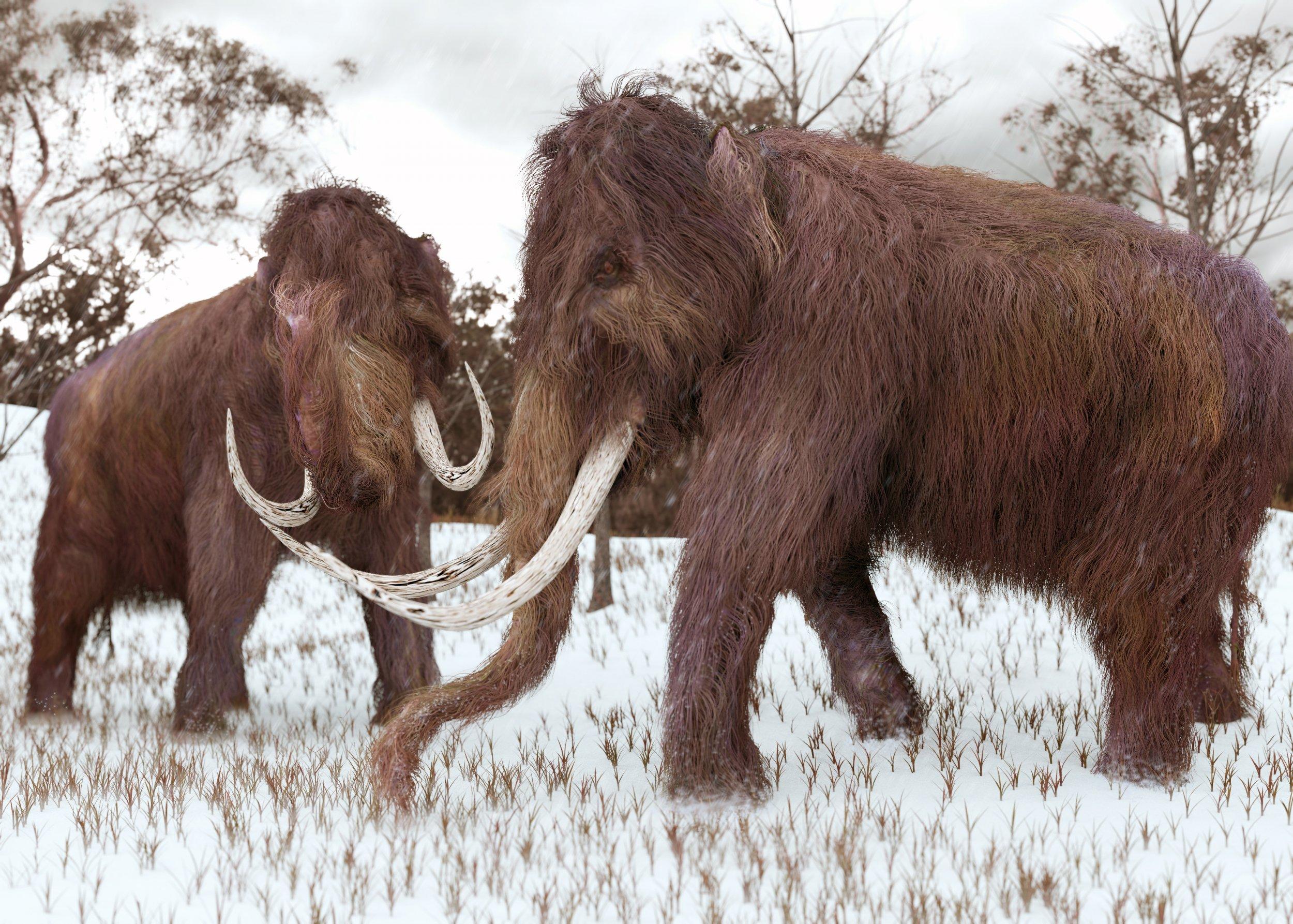 8_13_Woolly Mammoth