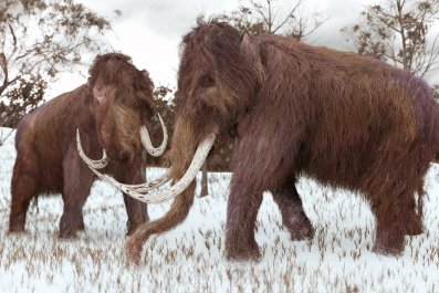 8_13_Woolly Mammoth