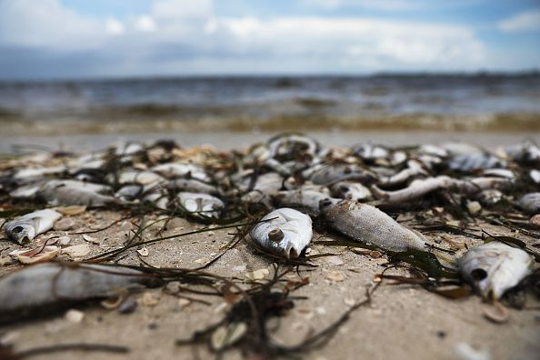 Florida Red Tide 2018 Update New Warning Issued For Four Counties