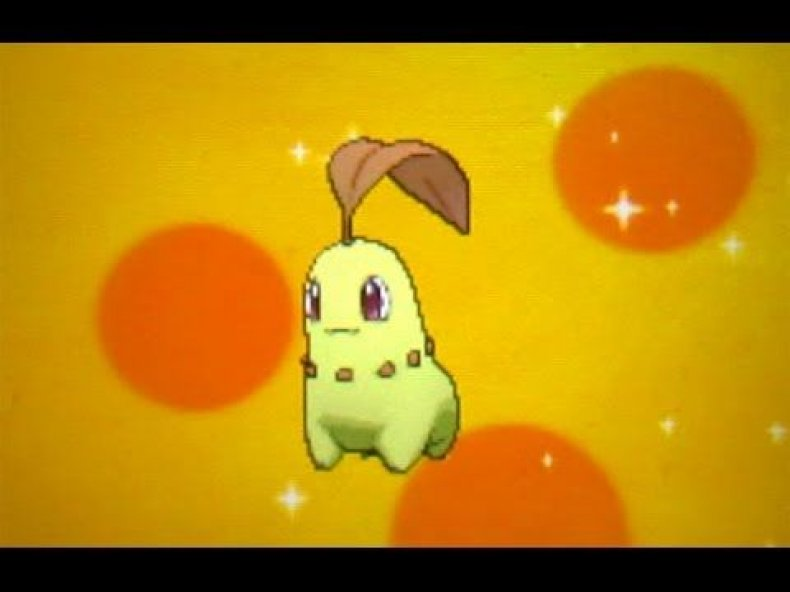 shiny chikorita pokemon