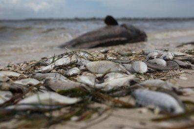 8_15_Florida Red Tide_02