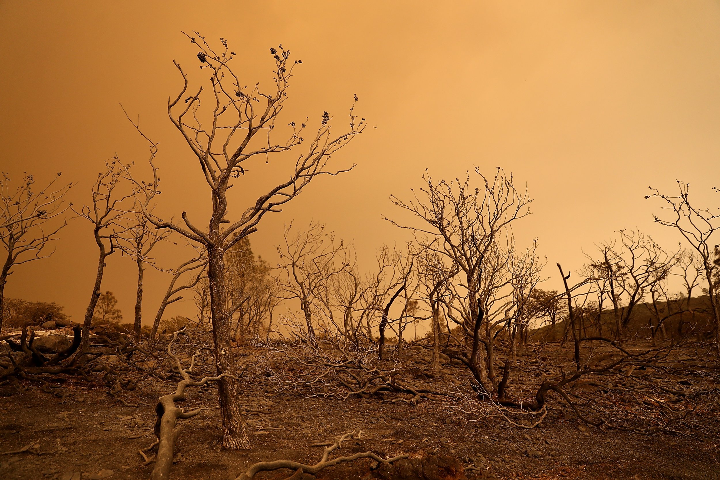 mendocino complex fire