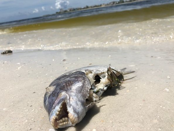 Florida Scientists Test Machine to Fight Toxic Red Tide
