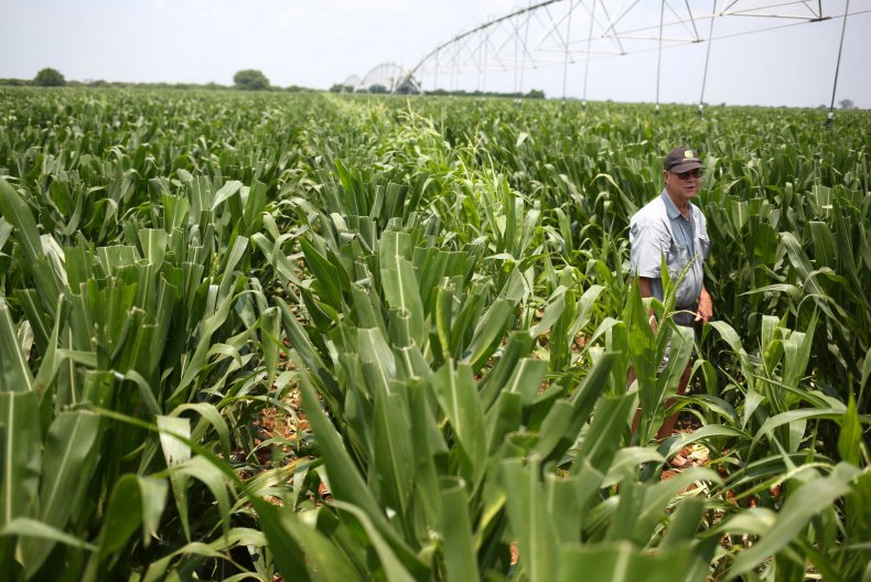 White Nationalists Praise Trump for Addressing White South African Farmers