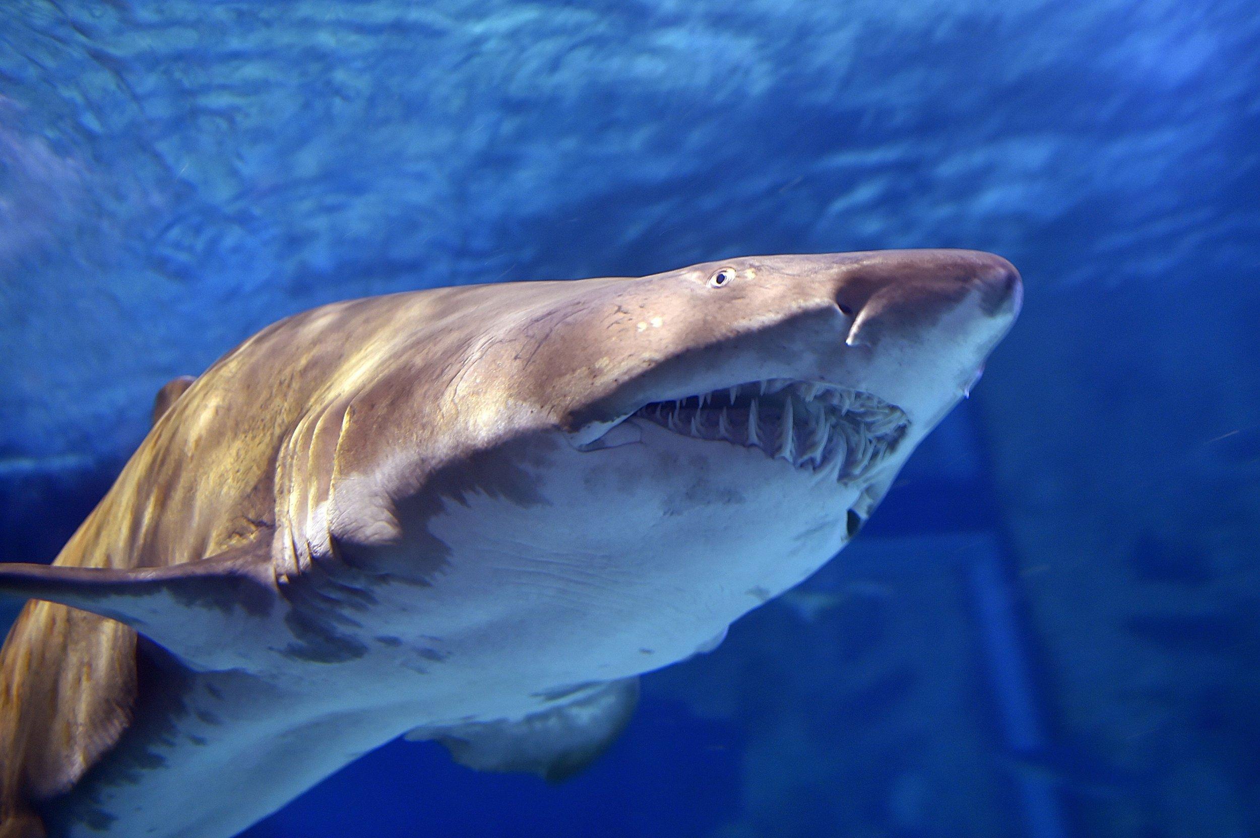 bull shark attacks galveston man
