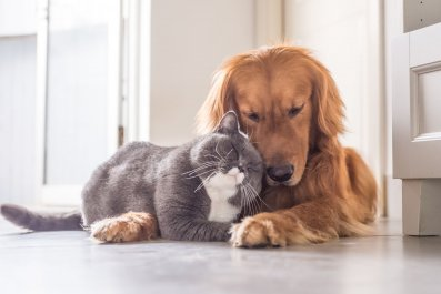 8_28_Dog and Cat